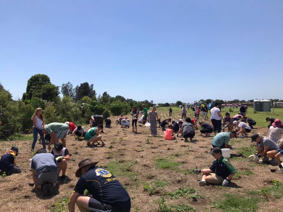 Biggest Tree Planting Oxenford